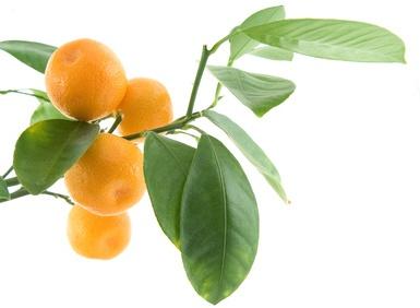 Azahar - La Naranja Y El Limón / Zahira