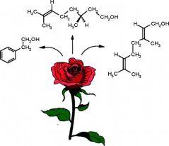 Rosa bioquímica