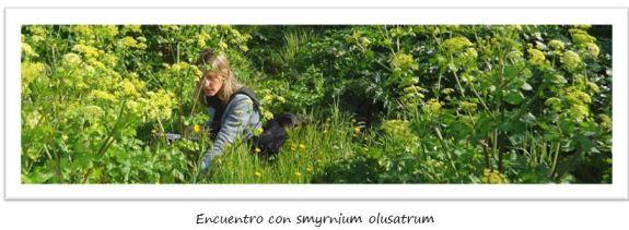 lerins_smyrnium