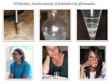 Aromaterapia Aceite esencial de hinojo marino anticelulítico anti-arrugas