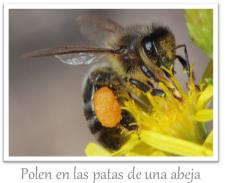 abeja_polen_png