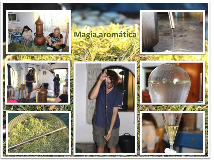 Destilación romero