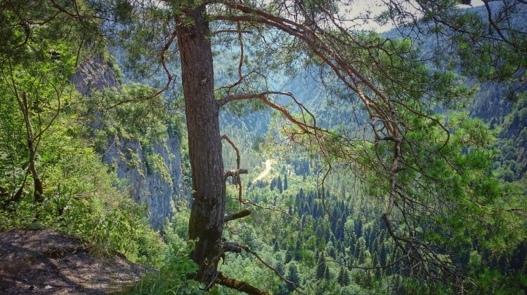 trees-green-branches-sky-leaves-mountains-1452085-pxhere2